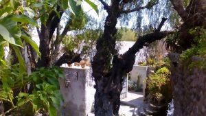 Ogród przy młynie w Socabaya